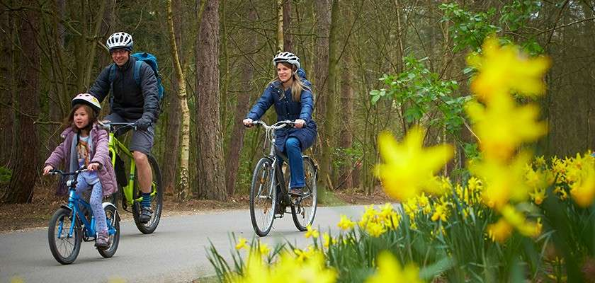 Family cycling through the forest in springtime