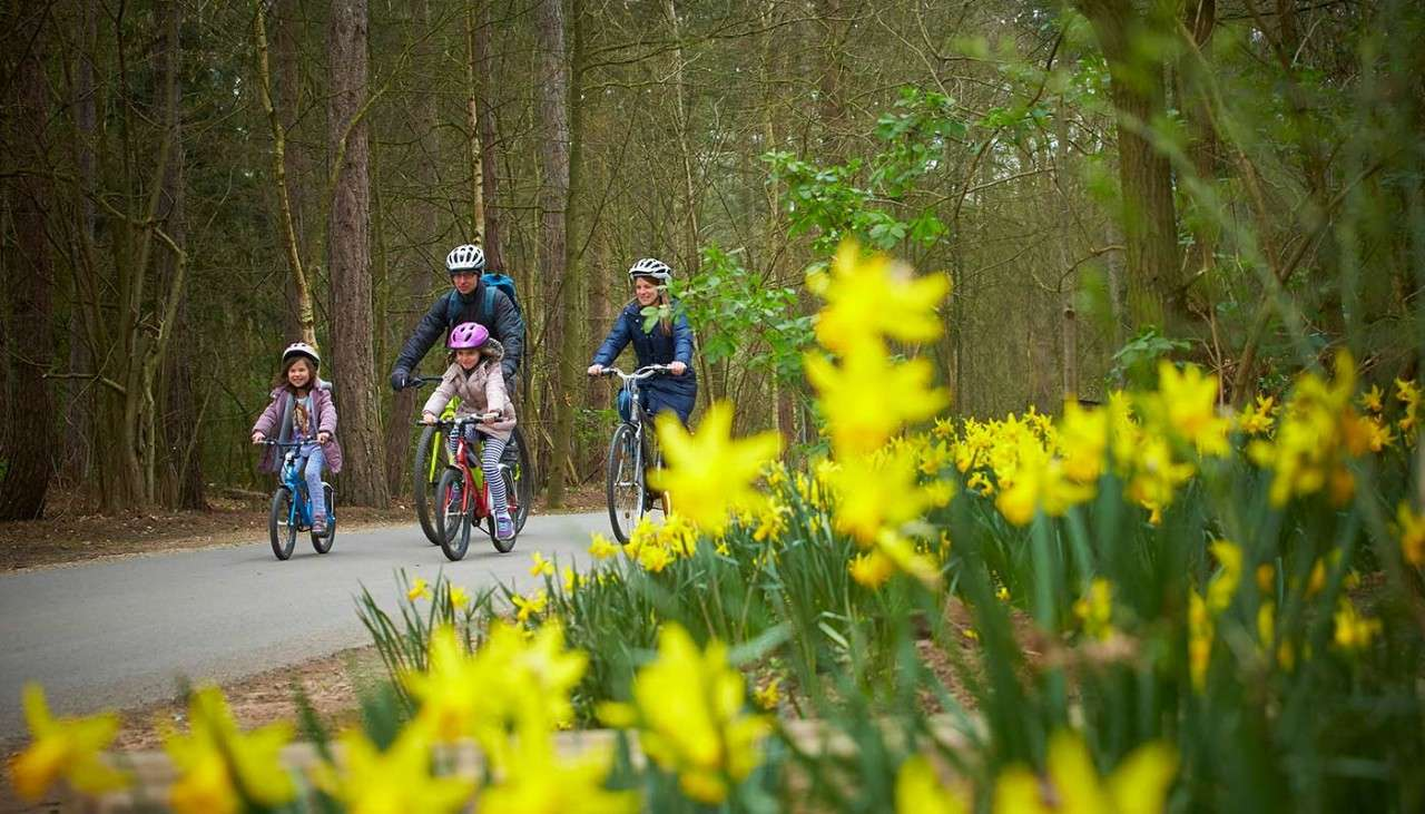 Family riding on their cycles beside spring daffodils
