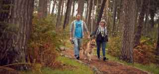 Dog friendly lodges