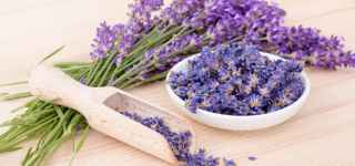 Lavender Relaxation