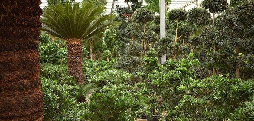 Tropical plants in the Subtropical Swimming Paradise