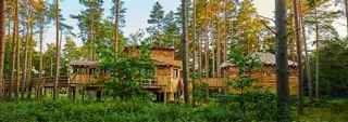 Woburn Forest Treehouse now available to book